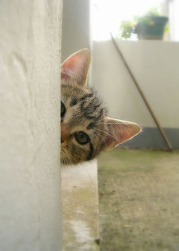 curious-roy