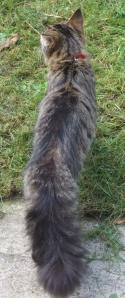 puss-puss-the-wondercat4