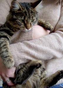 puss-puss-the-wondercat51